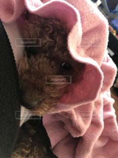 近くの帽子をかぶった犬の写真・画像素材[1188783]