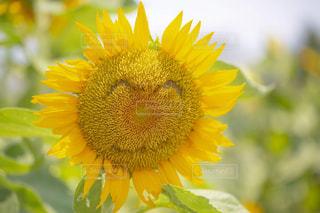近くに黄色い花のアップの写真・画像素材[1383693]