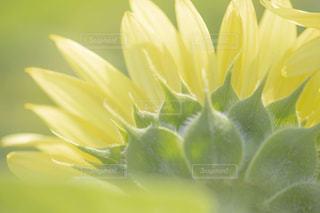 近くの花のアップの写真・画像素材[1385284]