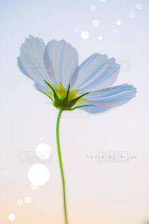 近くの花のアップの写真・画像素材[1513945]