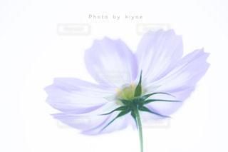 近くの花のアップの写真・画像素材[1513949]