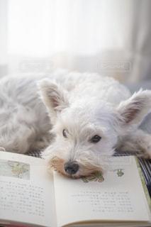 犬の写真・画像素材[1573372]