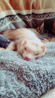 ベッドの上で眠っている猫の写真・画像素材[721280]