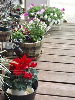 ウッドデッキの花達の写真・画像素材[733134]