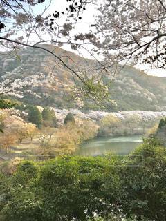 花,春,桜,屋外,ピンク,景色,樹木,新緑,春爛漫
