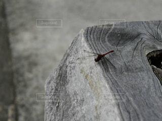 近くに動物のアップの写真・画像素材[868920]
