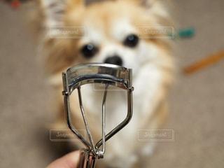 カメラを見て犬 - No.818546