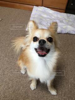犬の写真・画像素材[828438]