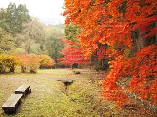 木の前にあるベンチの写真・画像素材[841519]