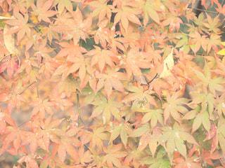 近くの木のアップの写真・画像素材[841811]
