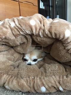 ベッドの上で横になっている猫の写真・画像素材[865114]