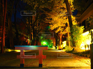 夜のライトアップはベンチの写真・画像素材[909115]