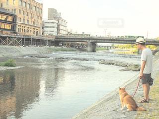 男と犬の橋の上を歩いての写真・画像素材[910763]