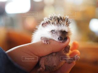 小動物を持っている手の写真・画像素材[982514]