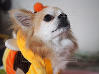 近くに犬のアップの写真・画像素材[982537]