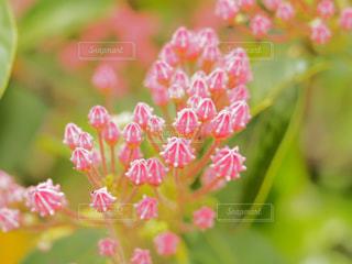 近くの花のアップの写真・画像素材[1123476]