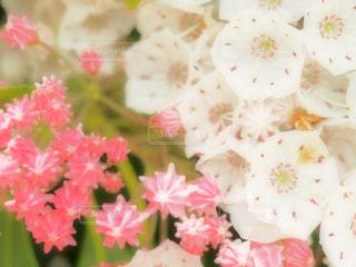 近くの花のアップ - No.1123499