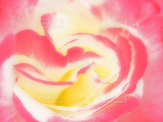近くの花のアップ - No.1123506