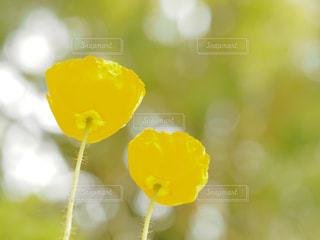 近くの花のアップの写真・画像素材[1123513]