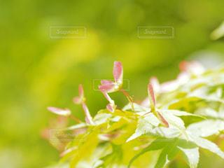 近くの花のアップ - No.1123517