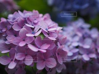 近くの花のアップの写真・画像素材[1124192]