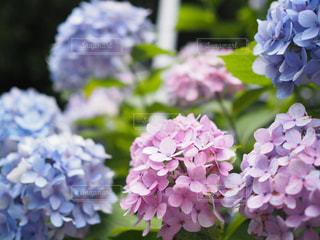近くの花のアップの写真・画像素材[1124980]