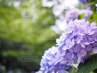 近くの花のアップの写真・画像素材[1124985]