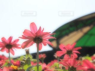 緑の葉と赤い花 - No.1124993