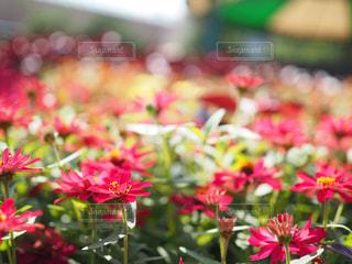 近くの花のアップの写真・画像素材[1124995]