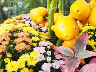 近くの花のアップの写真・画像素材[1126166]