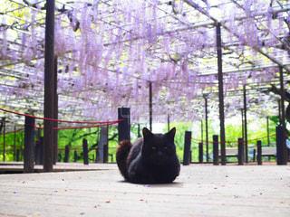 ベンチに座って黒い猫の写真・画像素材[1131073]