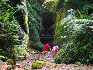 森の中の滝 - No.1180764