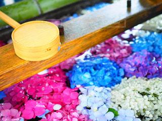 神社,紫陽花,梅雨,手水,インスタ映え