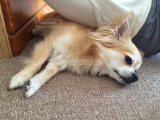 犬の写真・画像素材[1346061]