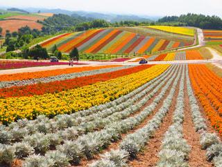フィールドのカラフルな花のグループの写真・画像素材[1368394]