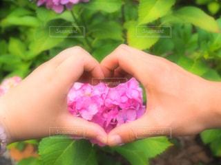 ピンク,ハート,紫陽花,ピンク色,pink,アジサイ,インスタ映え,御裳神社