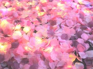 花のぼやけた画像の写真・画像素材[1462543]
