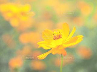 近くの花のアップの写真・画像素材[1462557]