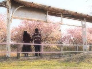 桜,カップル,駅,後ろ姿,女,男,背中,デート,ペアコーデ