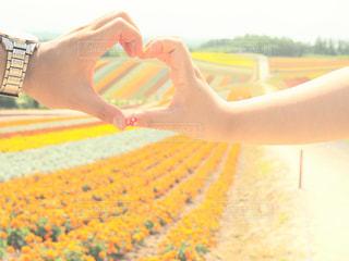 花畑の写真・画像素材[2342102]