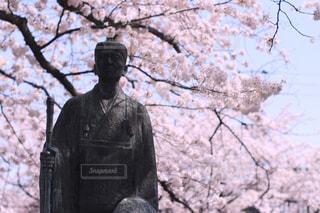 カメラ,桜,日本の絶景,樹木,松尾芭蕉,フォトジェニック,大垣