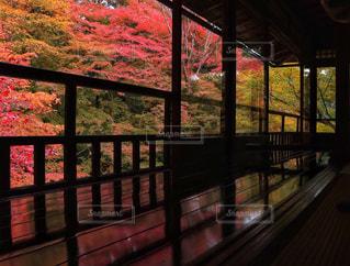 紅葉,京都,観光,瑠璃光院,紅葉狩り,床紅葉