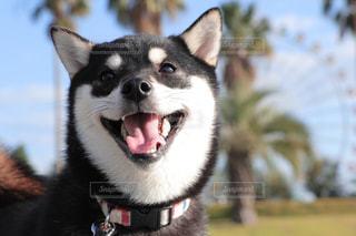 近くに犬のアップの写真・画像素材[1184271]