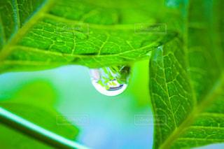 雨の写真・画像素材[2143085]