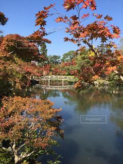 紅葉が美しい秋晴れの永観堂の写真・画像素材[906309]