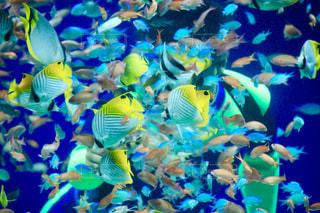 水面下を泳ぐ魚たちの写真・画像素材[722540]