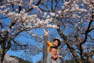 花,桜,屋外,子供,人物,笑顔,少年,はな,父,父と子,なかよし父子