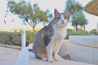 棚の上に座って猫の写真・画像素材[724987]