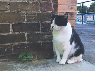 レンガの壁に座っている猫 - No.724999