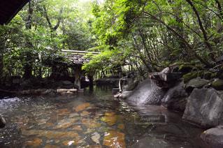 川を泳ぐ人たちのグループの写真・画像素材[753259]
